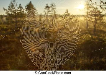 toile, coucher soleil, araignés