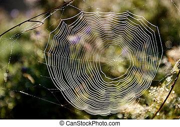 toile, forêt, araignés