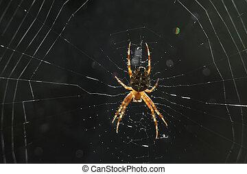 toile, grand plan, araignés, fantastique