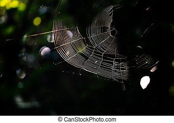 toile, jungle, araignés