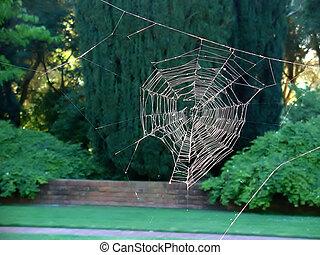 toile, sans, araignés