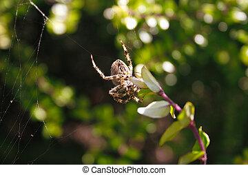 toile, sien, araignés