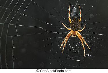 toile, soleil, araignés, éclat, grand