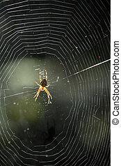 toile, soleil, araignés