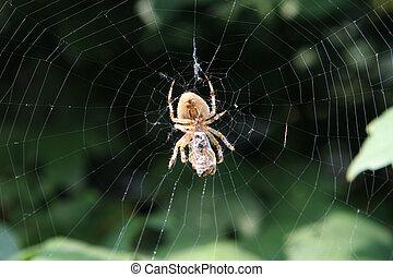 toile, web., araignés, guêpe, jardin