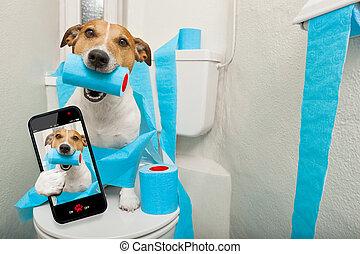 toilette, chien, siège