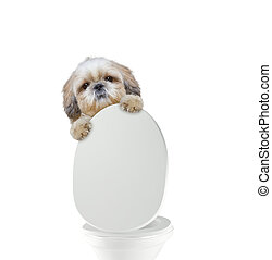 toilette, pooping, chien, mignon