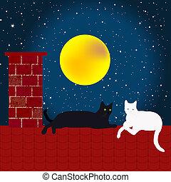 toit, chats, noir, blanc