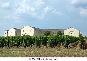 Tokaj vineyard