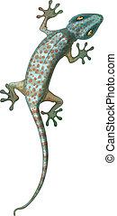 Tokay Gecko - Illustration of the tokay gecko
