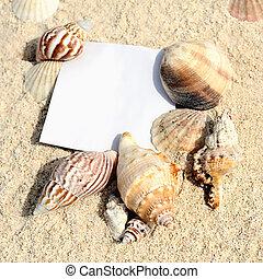 tom, papper, vita, sand strand, med, sjöstjärna, och,...