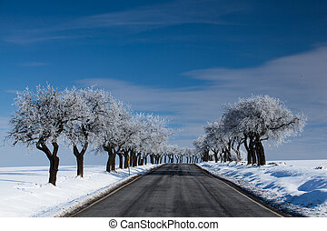 tom, vej, ind, vinter