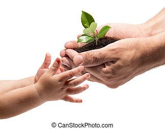 toma, manos, niño, planta