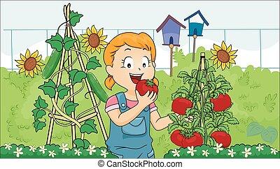tomaat, meisje, geitje, tuin, eten