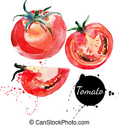 tomaat, set., hand, watercolor, achtergrond., getrokken,...