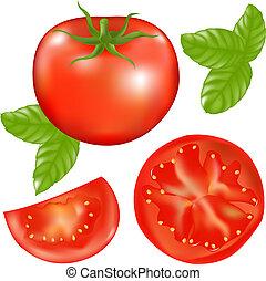 tomat, med, tomats andelar, och, basilika, bladen