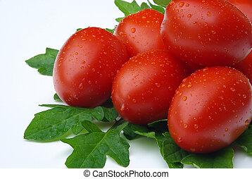 tomate, 13