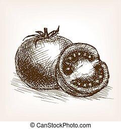 tomate, croquis, vecteur, style, illustration