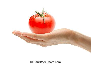 tomate, mão feminina