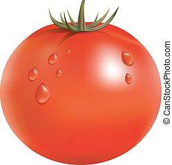 tomate, mûre, grand, illustration, vecteur, frais, rouges