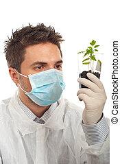 tomate, nouveau, examiner, usines, homme
