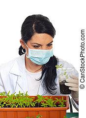 tomate, nouveau, plante, scientifique, examiner