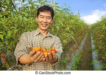 tomate, seu, fazenda, asiático, segurando, agricultor
