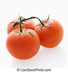 tomate, todavía, life.
