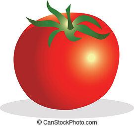 tomate, vecteur, illustration.