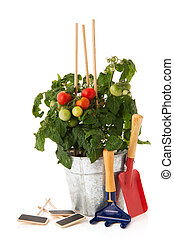 tomate, vegetal, planta, jardín