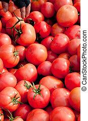 tomaten, 57
