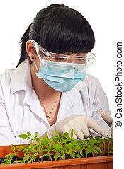 tomates, nouveau, pousse feuilles, examiner, scientifique, femme