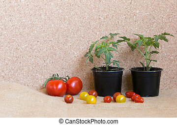 tomato before and after