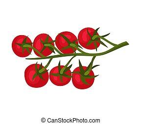 Tomato Branch Ingredient For Lasagna Preparation Vector Illustration