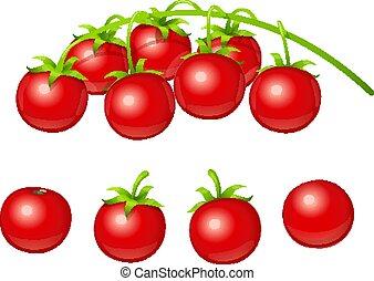 Tomato cherry. Set of fresh vegetable at branch. Vector.
