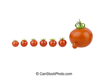 Tomato covey. Seven little cherry tomatoes with a big one...