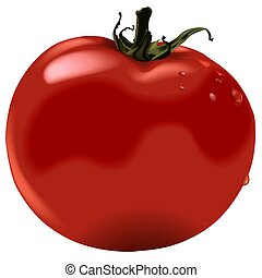 Tomato - High detailed and coloured illustration