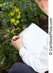 Tomato expert in a greenhouse