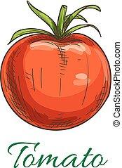 Tomato fruit vegetable icon