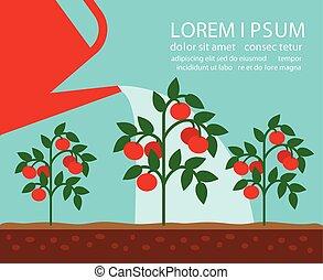 Tomato garden vector illustration