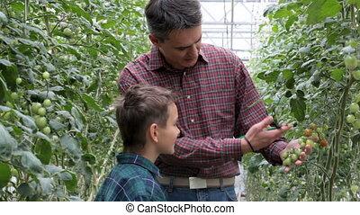Tomato growers