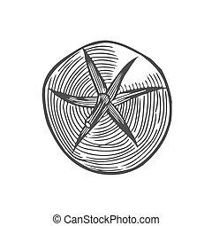 Tomato hand drawing engraving illustration