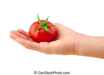 Tomato in hand isolated on a white background