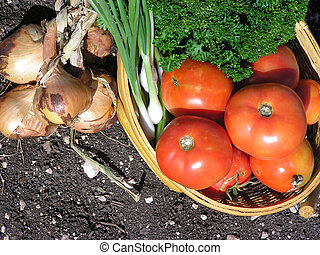 Tomato Onion Basket