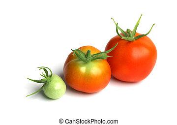 tomato pile on white