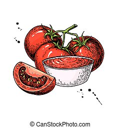 Tomato sauce Drawing. Vector isolated illustration with bowl full of pasta and tomato