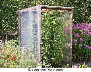 Tomato shelter in a garden