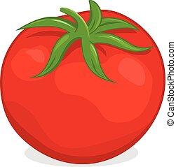 Tomato. Vector illustration