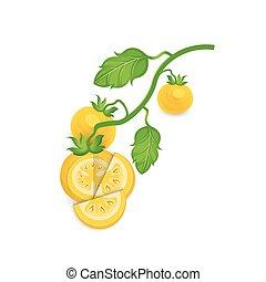 Tomato Yellow Color icon