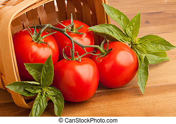 Tomatoes, Basil and a Basket - Surrounded by sweet basil,...